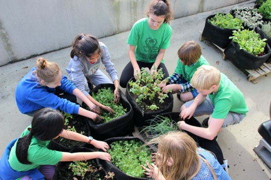 Students planting greens